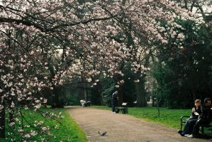 Spring in the park by Bantu69