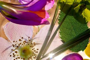 floral composition by AnjaSchlegelmilch