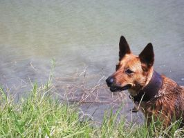 PhotoC Day 30 - My dog by LilSunnyGirl