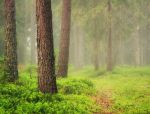 Misty Woods by JoniNiemela