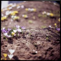 spring flowers 1 by M0rt