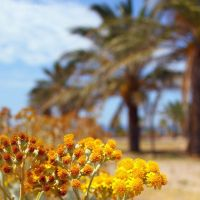Palms behind the yellow flowers by Jorapache