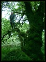 Climbing The Oak by Navanna