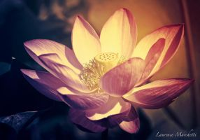 Mystic waterlily by Gallynette