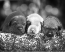 pups by mikebass