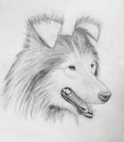 My Mark Crilley Dog Tutorial Results by aviceramics