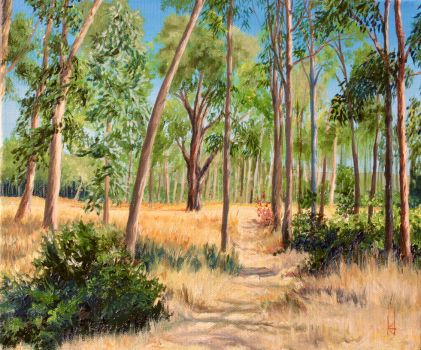 Point Pinole Eucalyptus Glade by Hareguizer