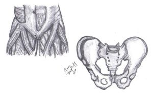 The Pelvis Anatomy Area Drawin by sassylilmommie