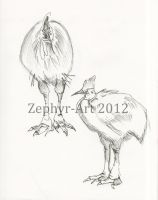 More cassowary studies by Zephyr-Art