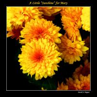 "A Little ""Sunshine"" for Mary by David-A-Wagner"