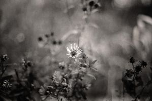 Lonely Flower by photozz