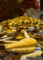 Yellow Wet Fall by yellowcaseartist