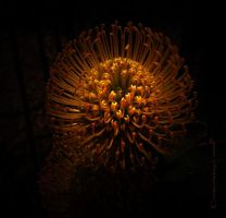 Sphere of Intuition by creativemikey