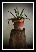 Agave by Dan52T