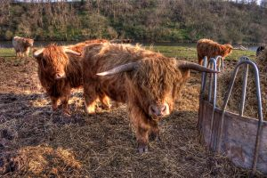 Moo by cipromil