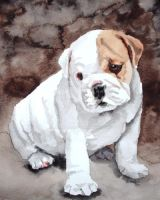 Bulldog Pup by RamonaQ