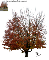 Cut-out stock PNG 83 - autumnal tree by Momotte2stocks