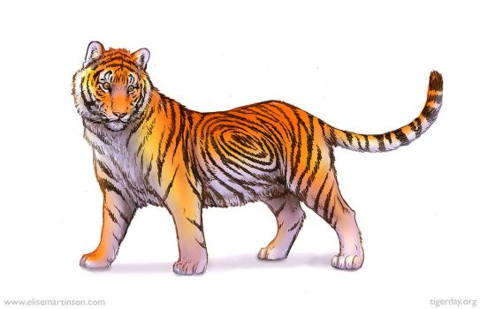 Global Tiger Day Sketch by T-Tiger