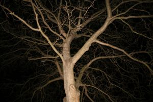 night tree stock III by LeandrasStock