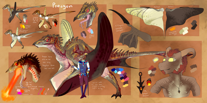 Procyon by SOMMY-OF-BRERO