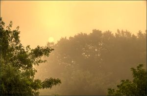 Golden Fog by bamako