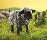 Black Sheep (toy) by anna142