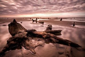 Submerged Forest by CharmingPhotography