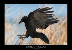 CORVUS.3 by THEDOC4