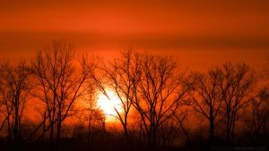 Sunset through the trees by chriskronen