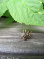 Two grasshoppers by AmandaGruvnas97
