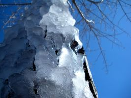 there's ice on my tree by EnforcedCrowd