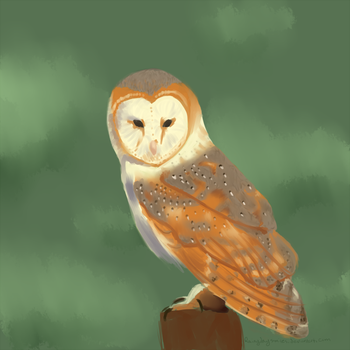 Barn Owl by Rainydaysmiles