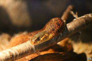 Sneaky Snake by LifeThroughALens84