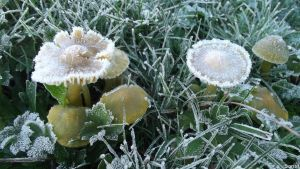 Frosted by Scr1b3