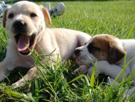 Puppies - Blondie and Bubba 2 by Angelos-Griever
