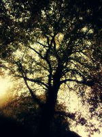 tree by EmiiLly