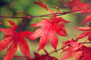Dance Of The Autumn Leaves by Nikki-vdp