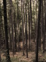 forrest 2 by compot-stock