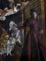 The Library by Scarlettletters