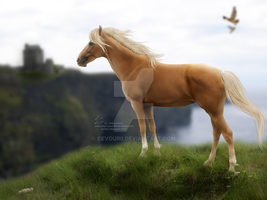 Dreaming Of Somewhere Else... by CoutureEquineDesigns