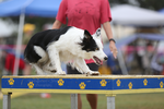 Happy Dog Agility I by Deliquesce-Flux