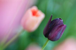 purple, pink and green by bimjo