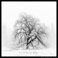 Pencil To Paper by aFeinPhoto-com