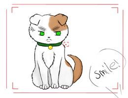 England Cat : Smile! : by CrystleWhiteWolf