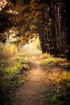 Sunny path by Domichal