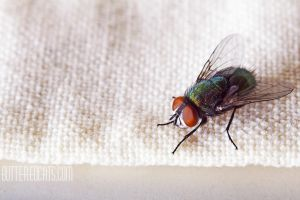 Calliphoridae #003 by ButteredCats