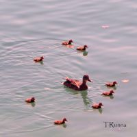 Learning to Swim by TRunna