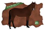 Nevada Import 20 FOR SALE by BRls-love-is-MY-Live