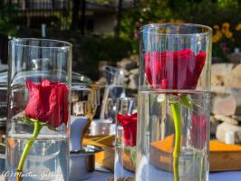 Roses  150829-12 by MartinGollery