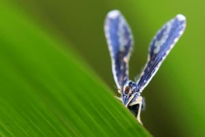 Insects 60 by josgoh